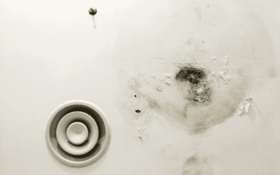 Mold Prevention Tips for the Summertime
