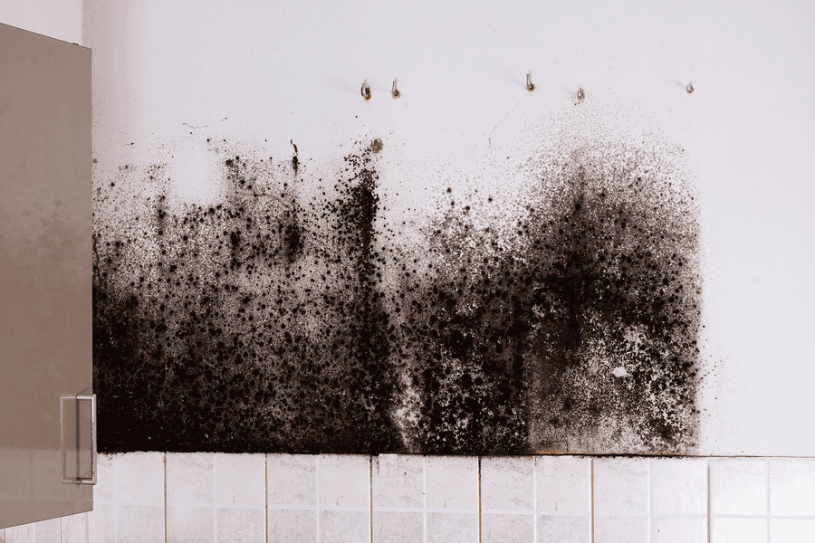 Toxic Black Mold and Your Health